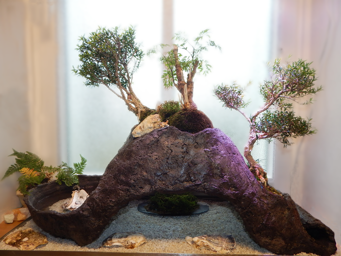 Bonsai Indoor