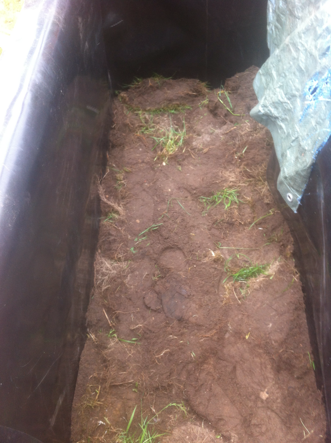 """Umgedrehrte Grassoden bilden mit weiteren 30 Zentimetern die Schicht bevor Muttererde aufgefüllt wurde. Abschließend füllte ich """"Bio-Erde"""" in einer Höhe von 10 cm ins Hochbeet"""