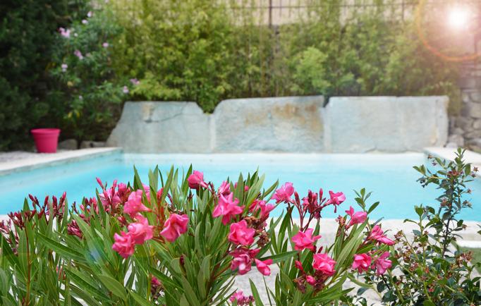 Piscine provençale - Chambre d'hôtes Provence