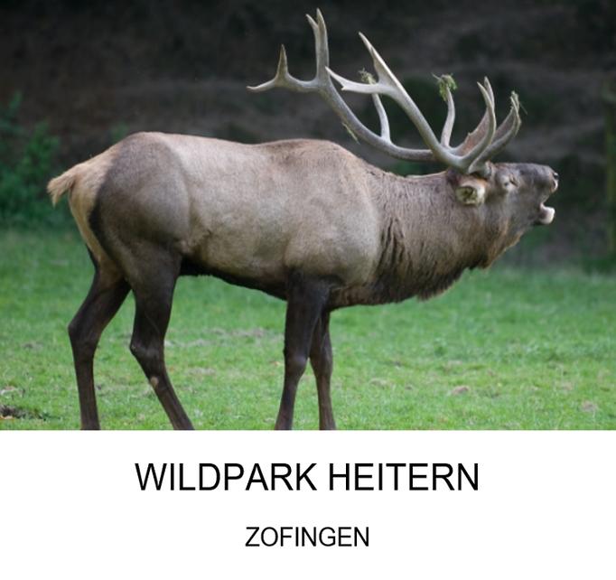 Ausflugsziel: Wildpark Heitern