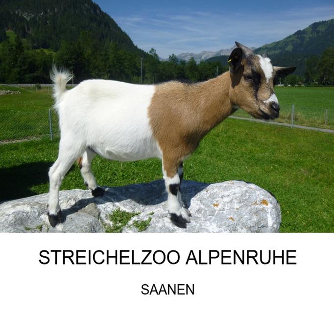 Ausflugsziel Kanton Bern: Streichelzoo Alpenruhe