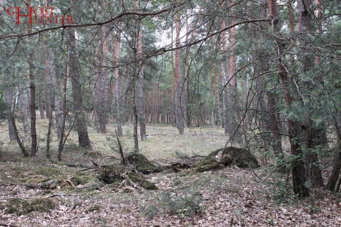 Teilweise stammen diese von umgestürzten Bäumen, die nach und nach verroten und das Bild der Umgebung neu gestalten. #ghosthunters #ghosts #paranormal #geister