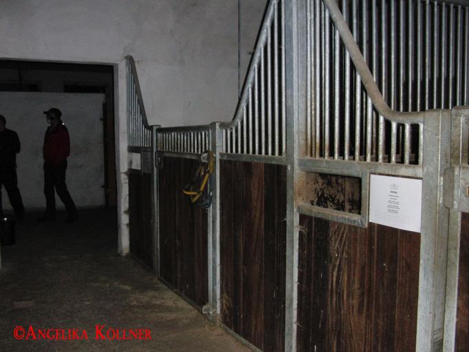 7. Eindrücke der ESP-Sitzung im Stall. #Ghosthunters #paranormal #Spuk