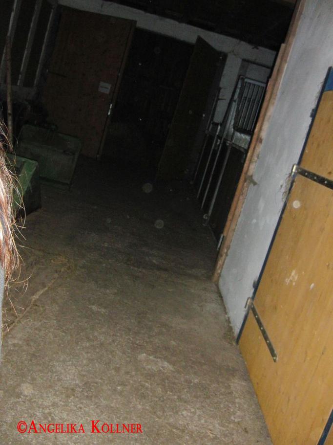 1. Eindrücke der ESP-Sitzung im Stall. #Ghosthunters #paranormal #Spuk