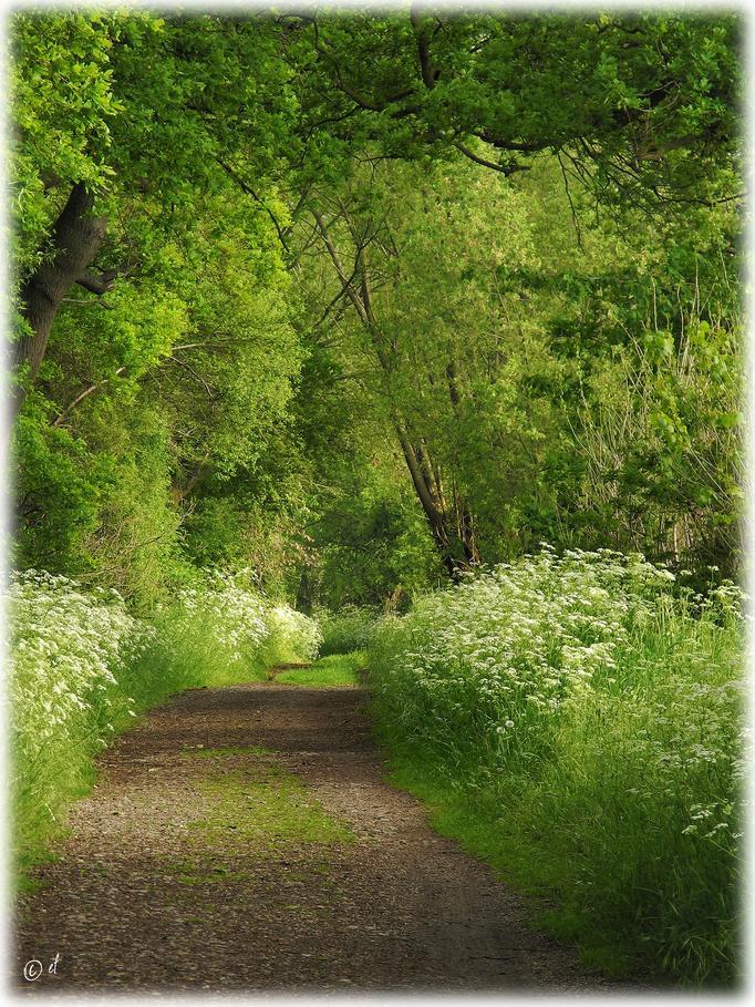Ein verträumter Waldpfad im Frühjahr
