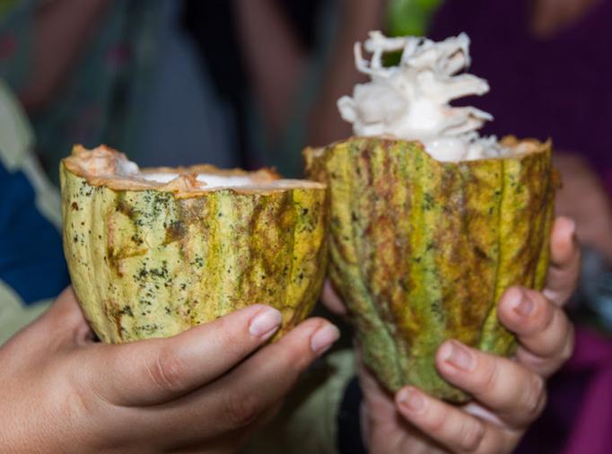 Kakao Liebe in Costa Rica