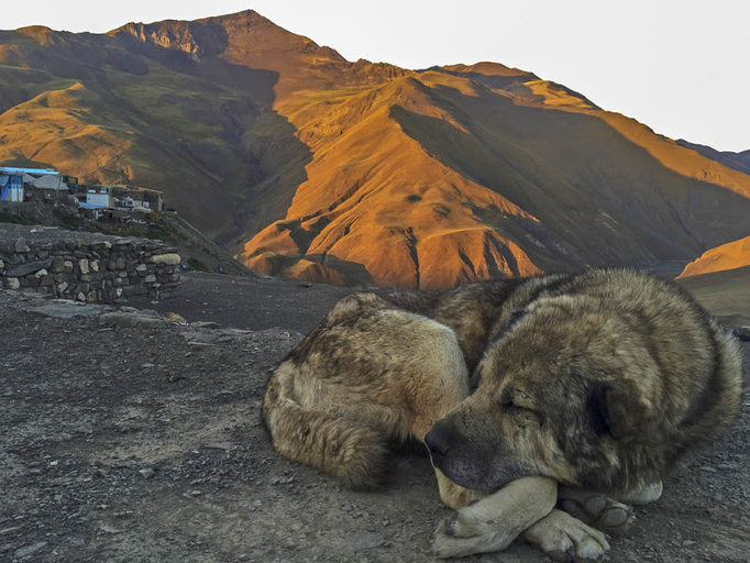 Früh morgens wenn im Kaukasus nicht nur die Menschen noch schlafen,  sondern auch Ihre besten Freunde