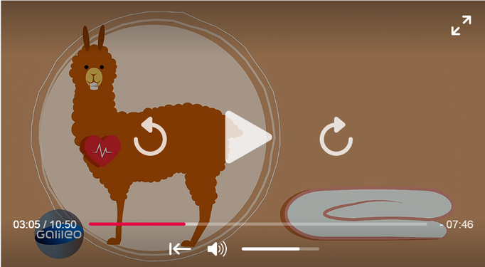 TV- Beitrag bei Galileo | Pro Sieben | Alpakabetten als Alternative zu Daunendecken
