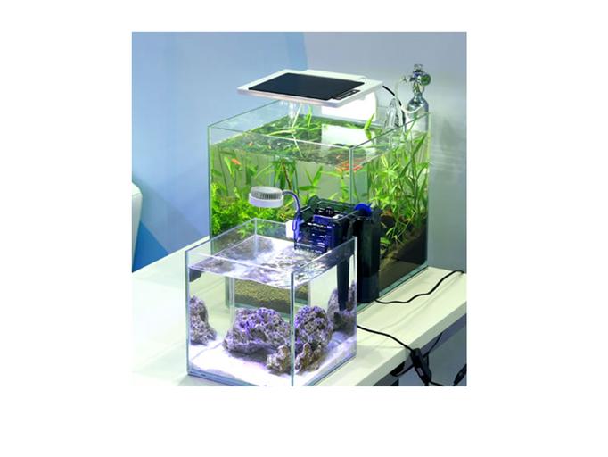 aqua serie bonsai garnelen aquaristik wettstein alles rund um garnelen und fischen aus eigener. Black Bedroom Furniture Sets. Home Design Ideas
