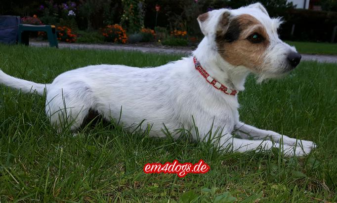 em4dogs.de Betty mit EM-Halsband