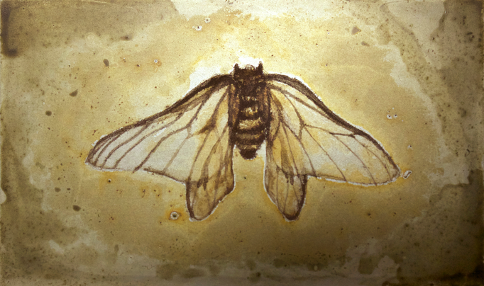 LLS-Insect3 / H90×W145mm / 07.2016