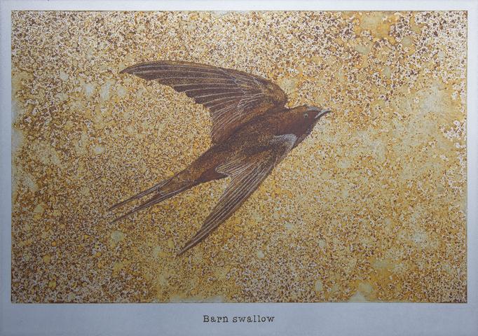ツバメ / Barnswallow / H182×W257mm / 07.2017