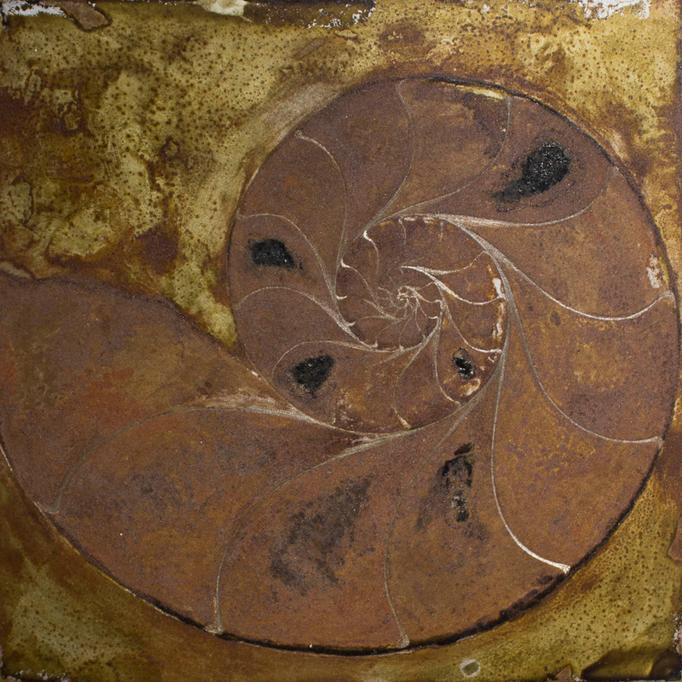 LLS-アンモナイトA / AmmoniteA / H200×W200mm / 06.2016