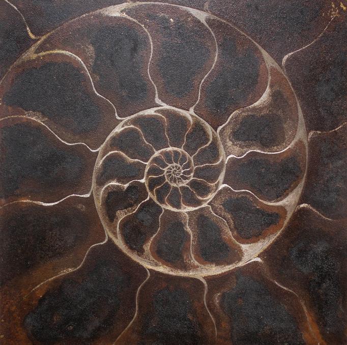LLS-アンモナイトC / Ammonite - C - / H300×W300mm / 06.2016