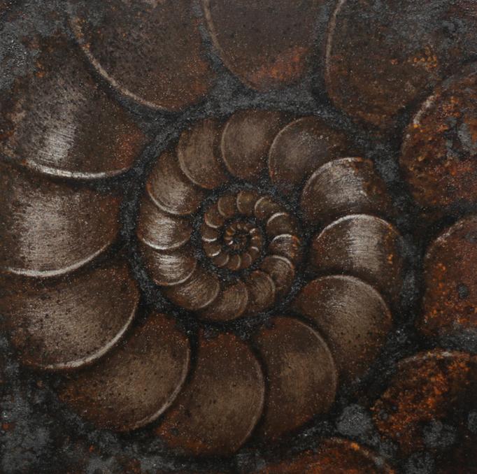 LLS-アンモナイトB / ammoniteB / H200×W200mm / 06.2016