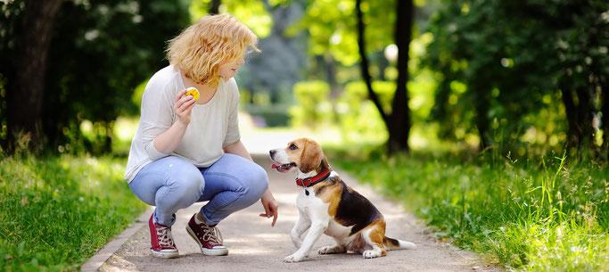 Jonge hondencursus hondenschool Harderwijk Nunspeet Hulshorst