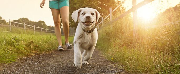 Puppycursus dogsblog hondenschool nunspeet harderwijk ermelo hulshorst hondentraining puppy's honden