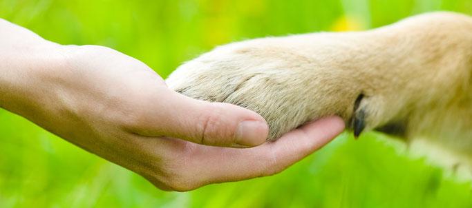 Puppycursus Nunspeet Vierhouten Dogsblog