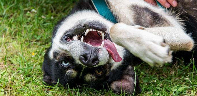 Dierendag Dogsblog Hondenschool & Avo Diervoeders