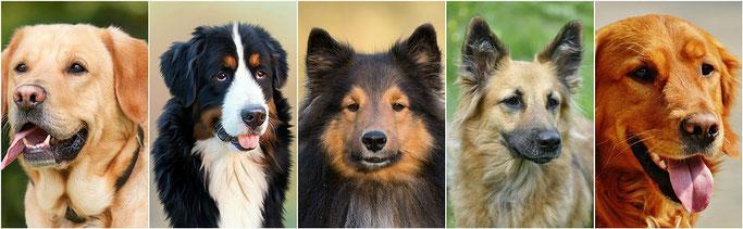 Dogsblog Hondenschool Nunspeet Harderwijk algemene voorwaarden puppycursus trainingen op maat