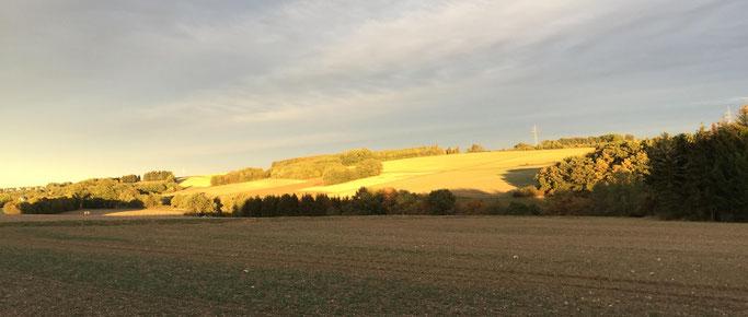 Die Felder oberhalb Starkenburgs