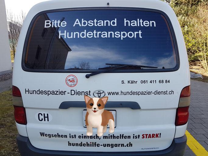 Hundespazierdienst, Baselland, Birseck, Basel, Sandra Kähr, Spiel und Spass