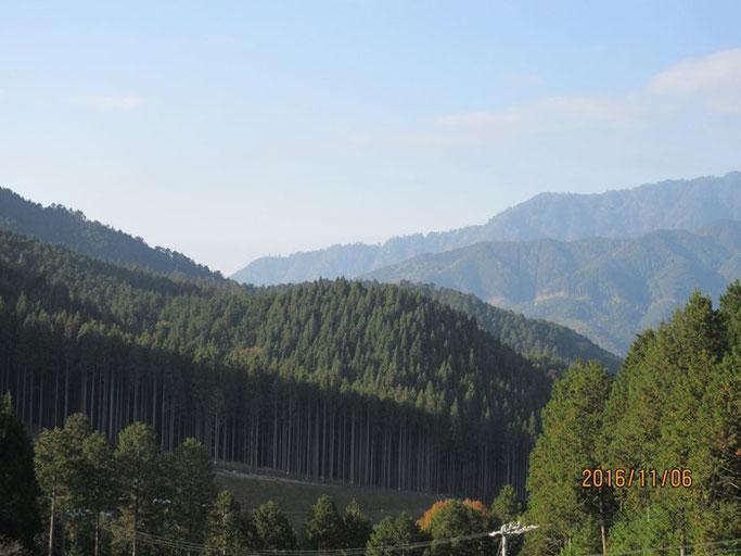 長野・南木曽の浄土真宗 長延寺さん近くの手入れの生き届いた国有林。