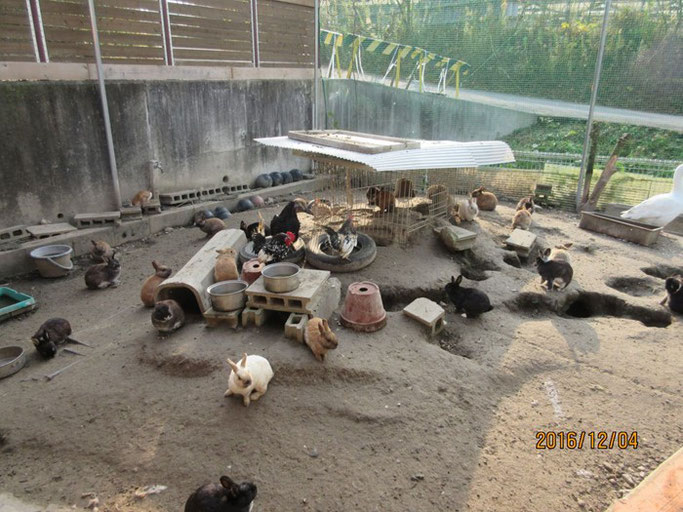 広島・福山の浄土真宗 南光坊の動物達