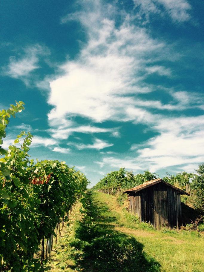 Wetterschutz bei der Arbeit im Weingarten