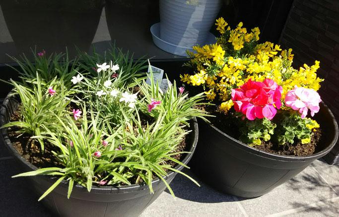 大分市 みつか漢方養生堂 寄せ植え お花