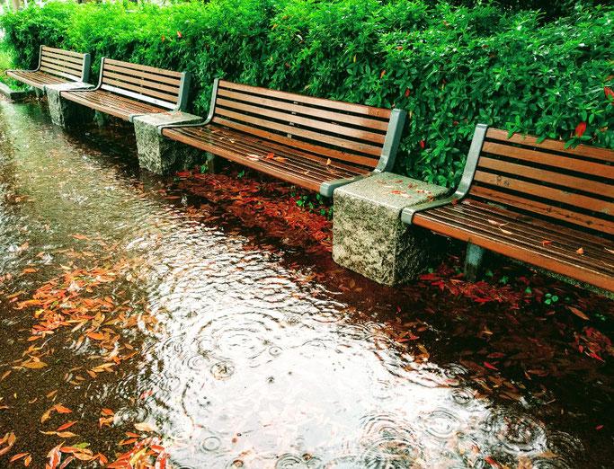 大分市 みつか漢方養生堂 雨の日の散歩