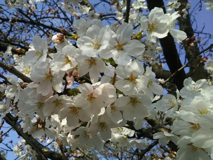 大分市 みつか漢方養生堂 自律神経の乱れ 春の養生