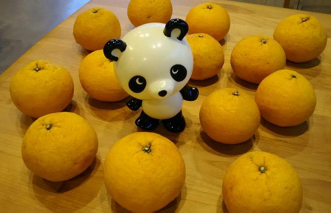 柑橘類「甘夏」抗酸化作用 肝の機能を高め気の巡りを良くする 大分市 みつか漢方養生堂