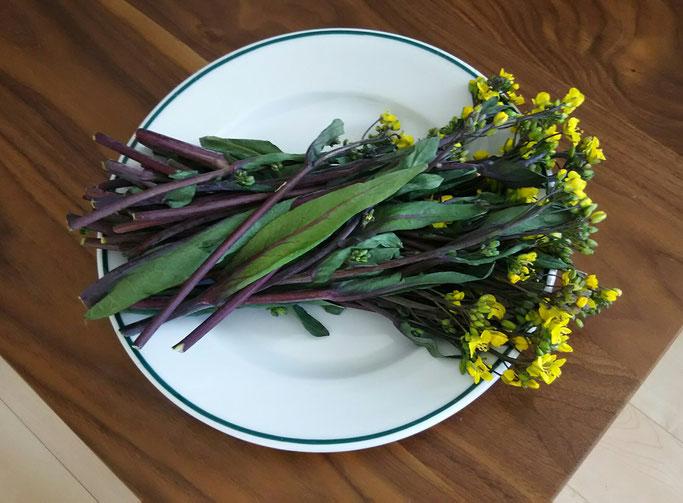 大分市 みつか漢方養生堂 菜の花