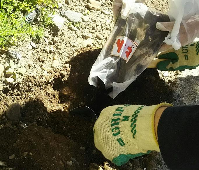 大分市 みつか漢方養生堂 ジャガイモ栽培