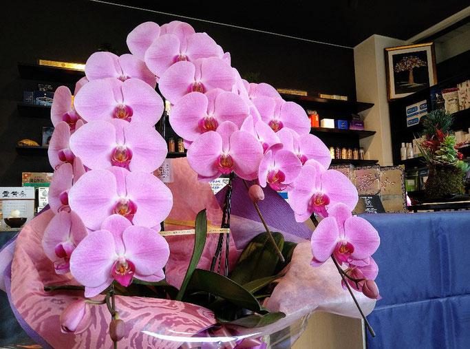 大分市 みつか漢方養生堂 ピンクの胡蝶蘭