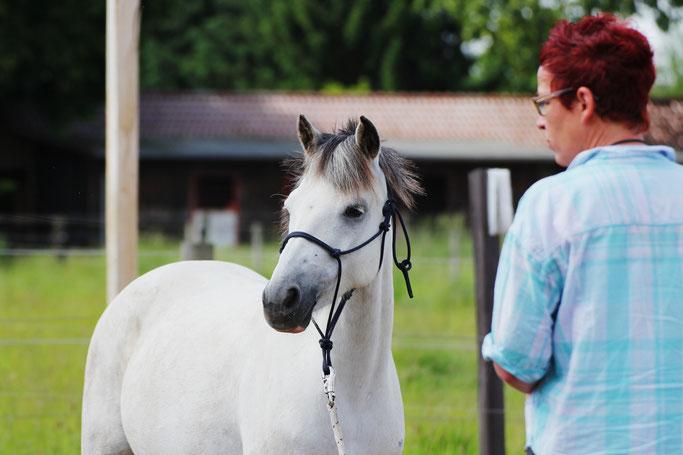 Jungpferdeausbildung, Natural Horsemanship, ways2liberty