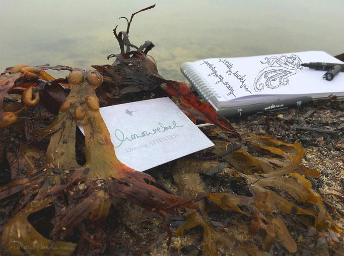 honourebel basis die kunst etwas zu bewegen bild mit zeichenblock am strand mit meeresalgen