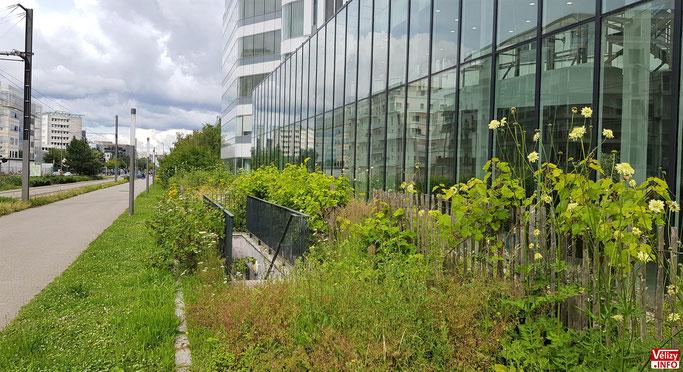 Ce petit jardin du Campus Pierre Berger se trouve le long du tramwag T6 à Vélizy-Villacoublay.