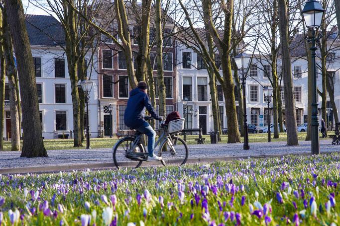 Lange Voorhout im Frühling, Foto: Ulrike Grafberger