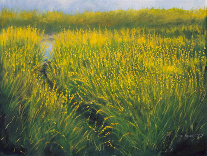 Green and Gold: Marsh Reeds in Sun