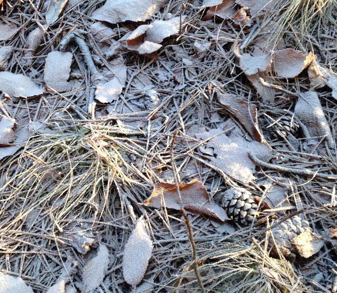 落ち葉に霧氷