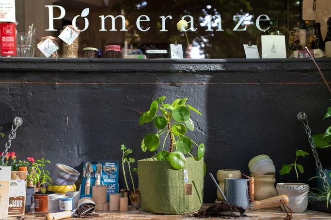 Seed Bombs Die Stadtgärtner, Burgon & Ball, Moss Keramik, Pilea, Root Pouch, Paper Potter