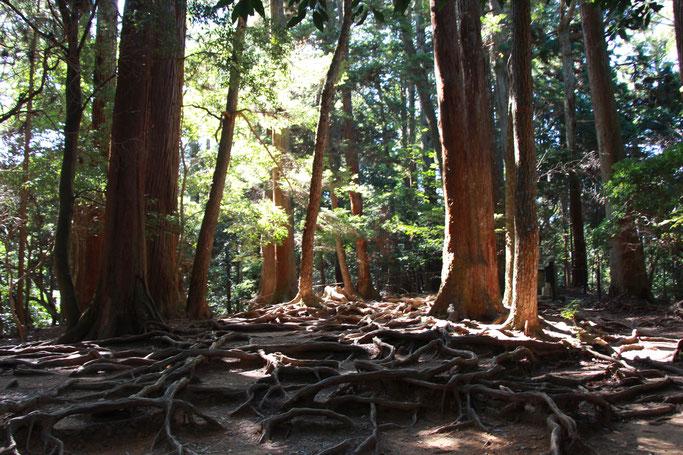 Kyoto - 5 Family Friendly Hikes - Hiking from Kurama to Kibune