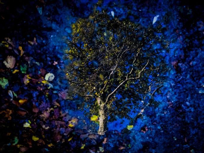 Soudaine évasion  Des feuilles du chêne captif  Jusqu'au bleu des nuits