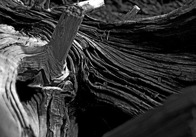 Taureau échoué  Espérant les grandes marées  Longue agonie