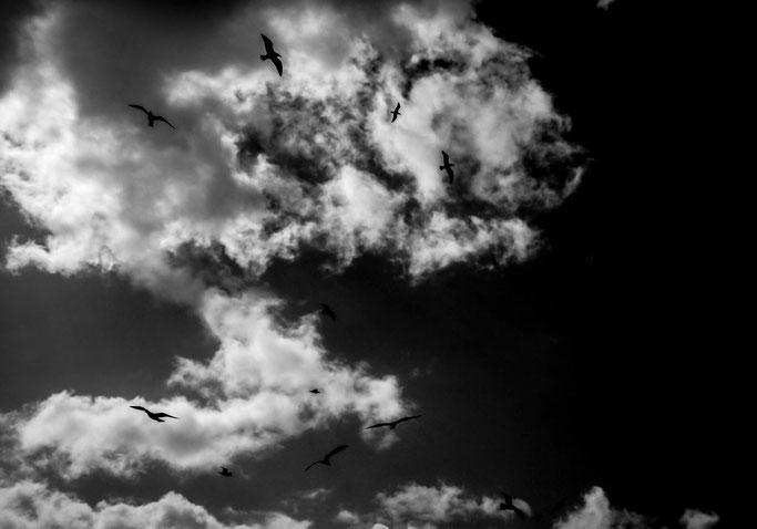 Les oiseaux de mer  Comme des brigands libres  Nuages affolés