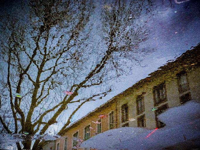 Le ciel contre le sol  L'arbre au fond de la flaque  La terre invisible
