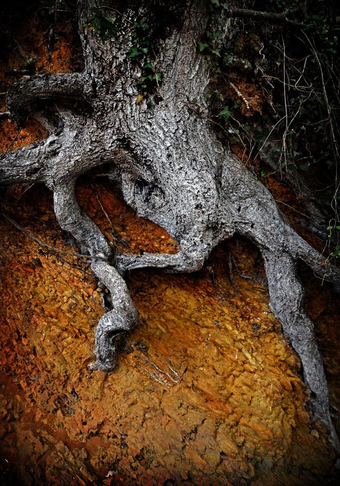 Fouillant dans la terre  Les racines de la mémoire  Fêtent l'au-delà