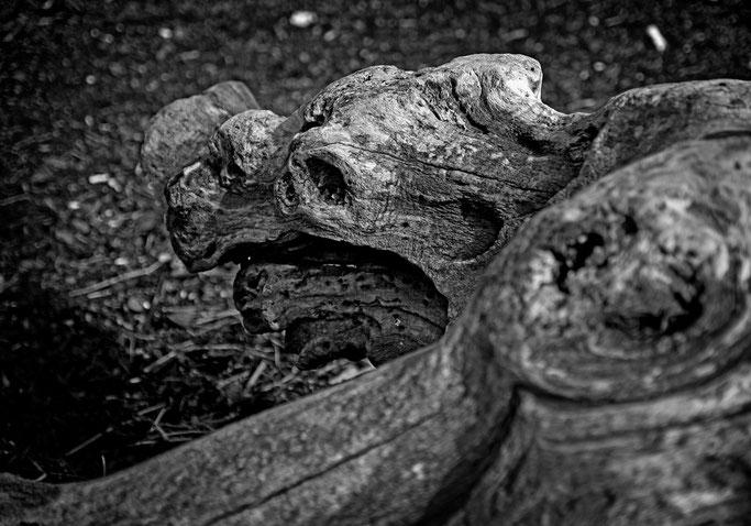 Tortue d'eau, de bois  S'assoupit sur les galets  Ombre de brume